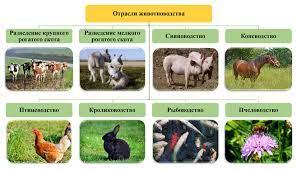 Основы животноводства, анатомия и гистология сельскохозяйственных животных