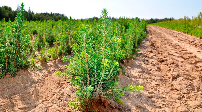Основы функционирования биоресурсных воспроизводств
