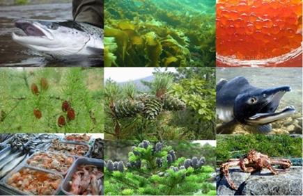 Ресурсообеспеченность территориальных  биоресурсов