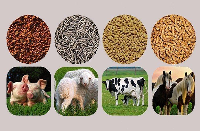 Переработка сопутствующего сырья и производство кормовой продукции