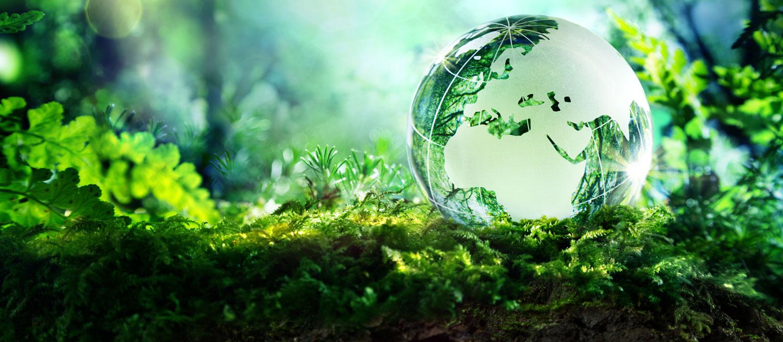 Государственная политика в природопользовании и охрана окружающей среды